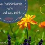 Naturheilkunde und wie sie mir durch eine schwere Zeit geholfen hat - Naturheilkunde.de